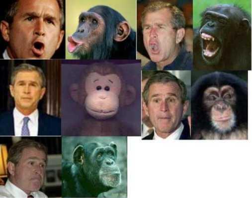 bush-monkey1.jpg