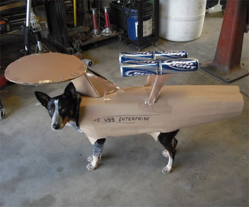 Dammit, Jim, I'm a dog, not the Star Ship Enterprise!